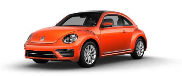 beetle-jelly